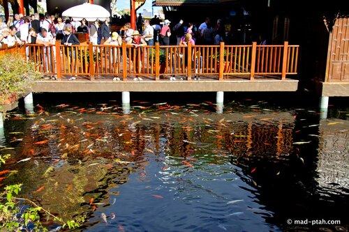 лоро парк, золотые рыбки