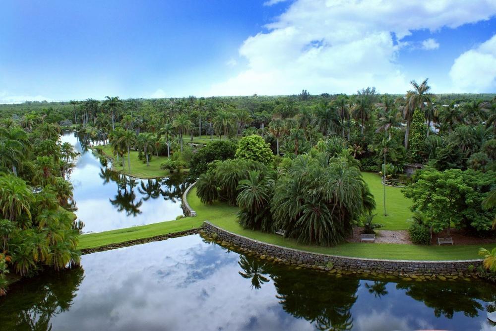 Впарке растет уникальная коллекция редких тропических растений, втом числе пальмы, цветущие деревь