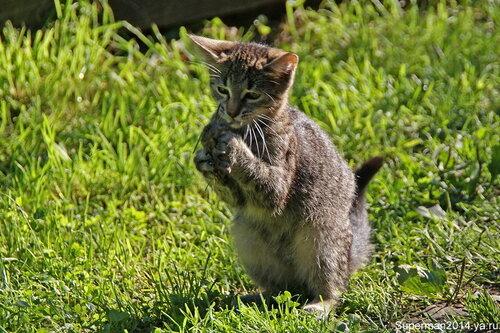 Мышка извини, я кажется тебя убил...