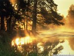 Gold nature (2).jpg