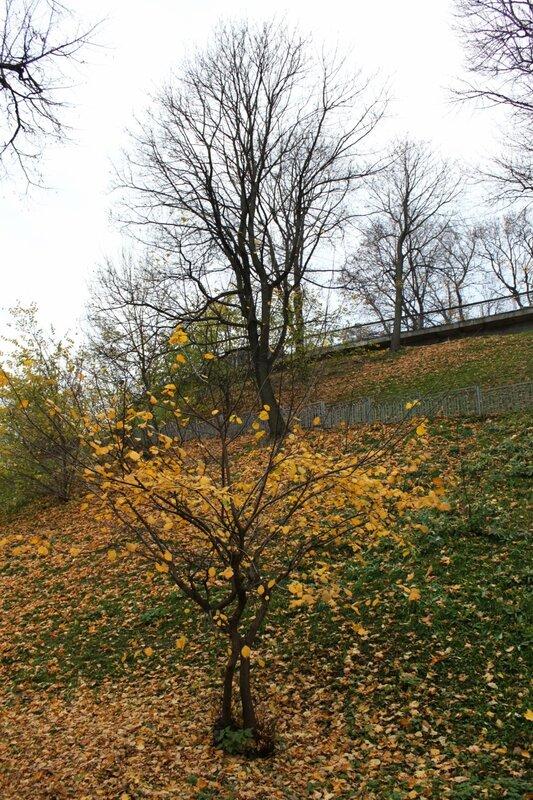 Опавшая листва на склоне