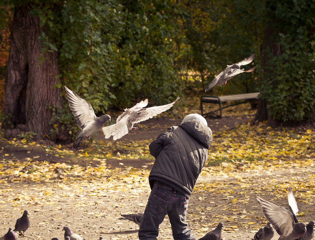 Птицы и люди... Фотопрогулка с Nikon D5100 и телевиком Nikon 70-300mm f/4.5-5.6G.