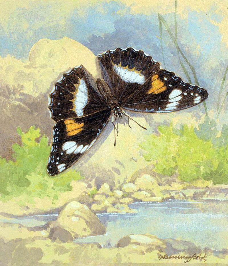 Нежная бабочка крылья расправила. Акварели Gordonа Beningfield