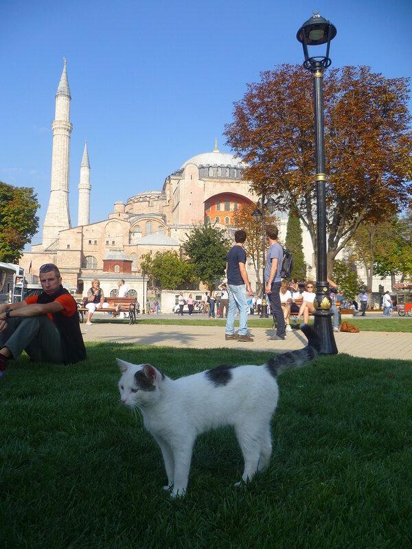 Кошки в Стамбуле (Cats in Istanbul).