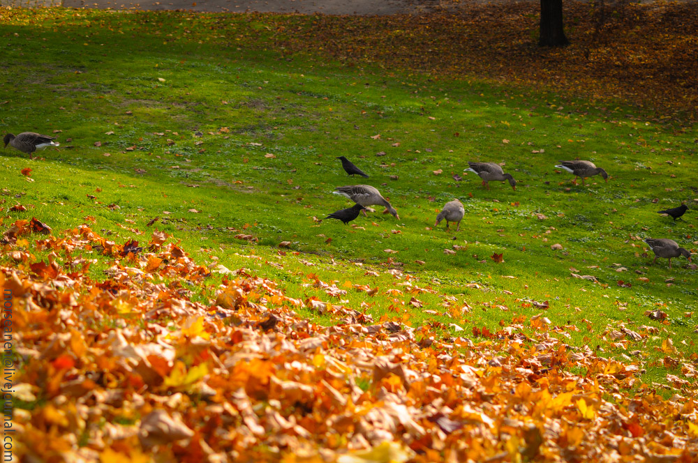 Herbst-Munchen-2013-(43).jpg