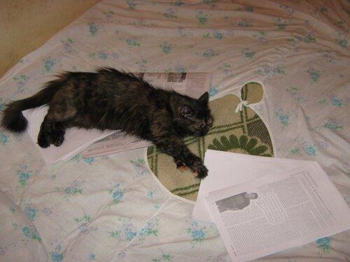 Достойно кота Мурра.