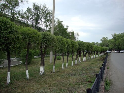 20110606 - Стрижка деревьев09