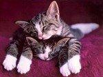 кошкина любовь