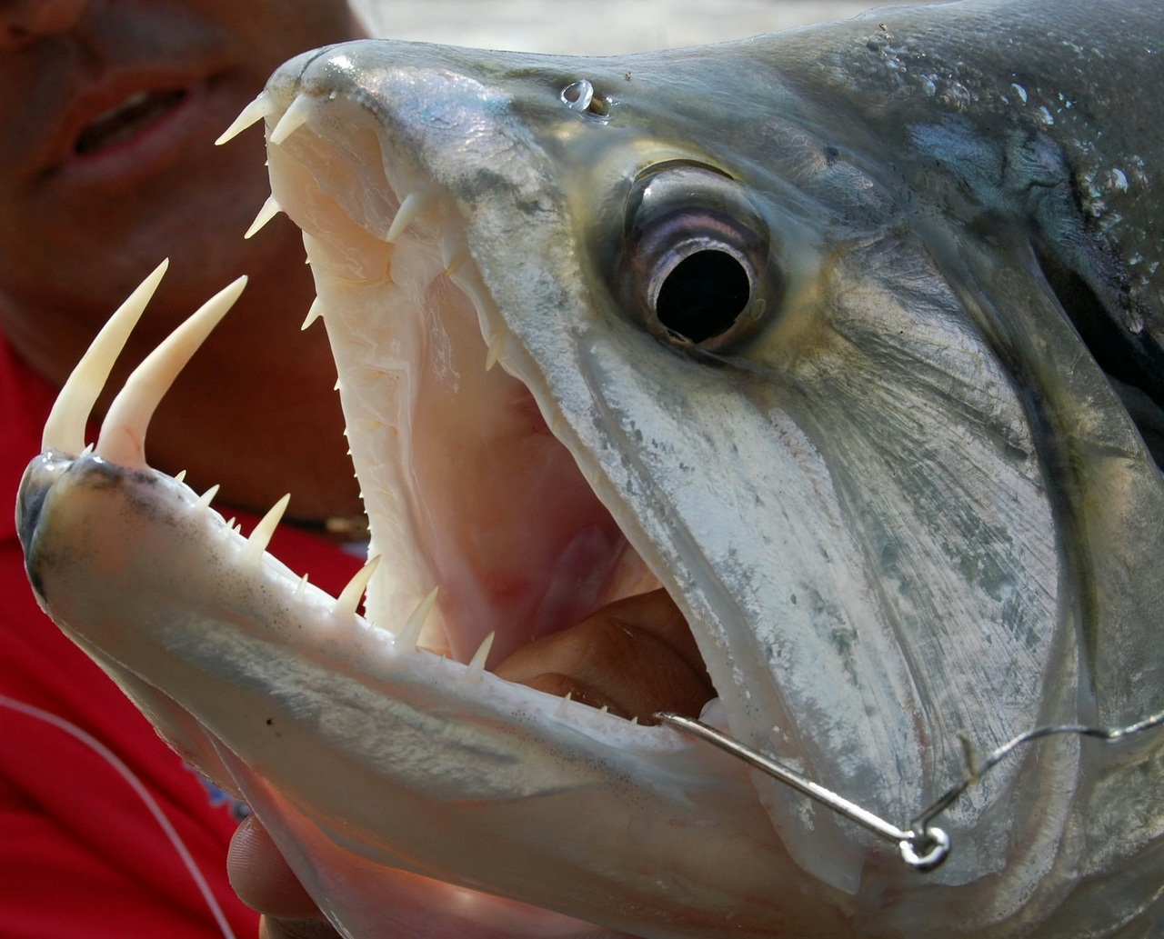 рыба с огромными зубами фото время второй поездки