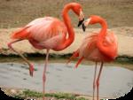 Flamingo-Mika.png