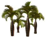 Palms  (29).png