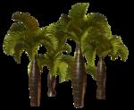 Palms  (29).png