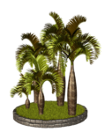 Palms  (33).png