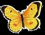 Бабочки  0_6b157_aa67e2ac_S