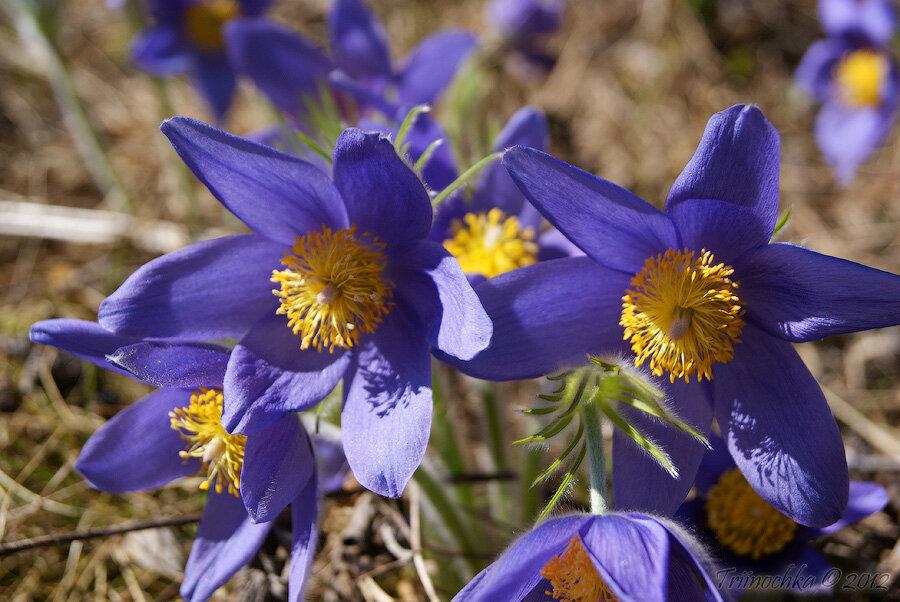Фото весны