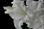 334-flower-LB TUBES.png