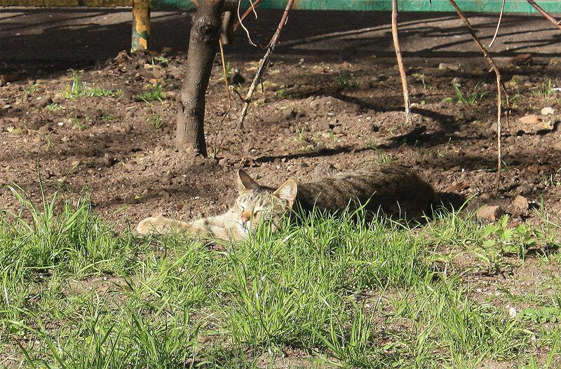Кошечка спит на солнышке