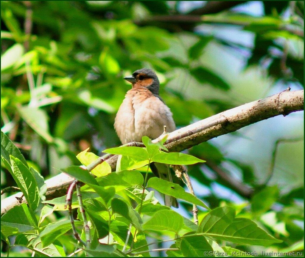 Фото птиц который снял сам