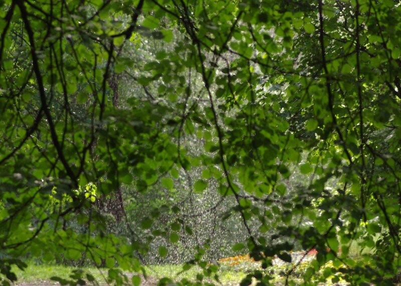 стена дождя сквозь листву
