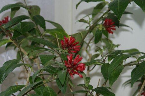 удобрение для комнатных растений сделать сам