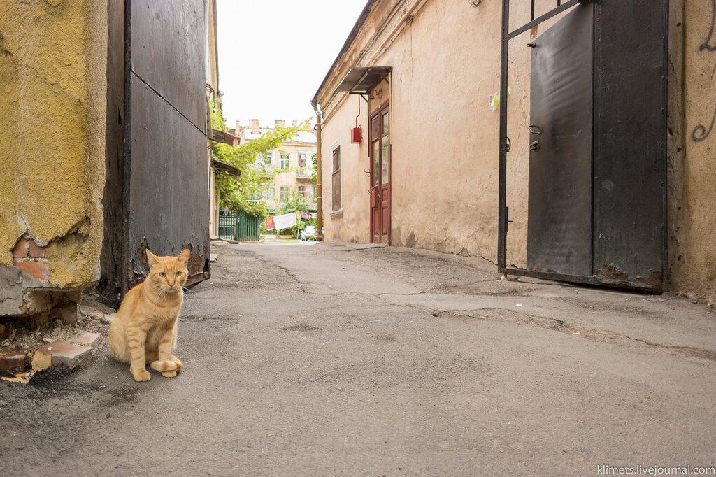Одесские дворики и котики