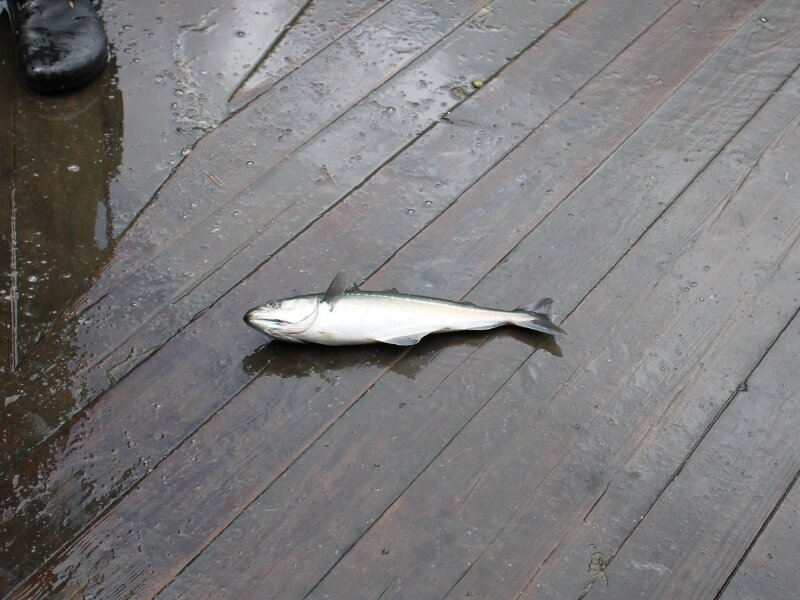 Гейрангер, рыбалка