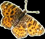 Бабочки  0_6b155_ba2d7d2c_S