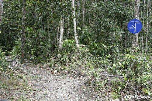 Дорожный указатель посреди джунглей