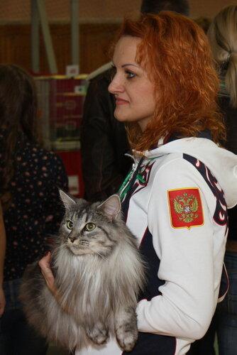 """Международная выставка кошек """"Удивительные кошки"""", 5-6 октября 2013, г. Сургут, ХМАО 0_ddad8_6f8545d2_L"""