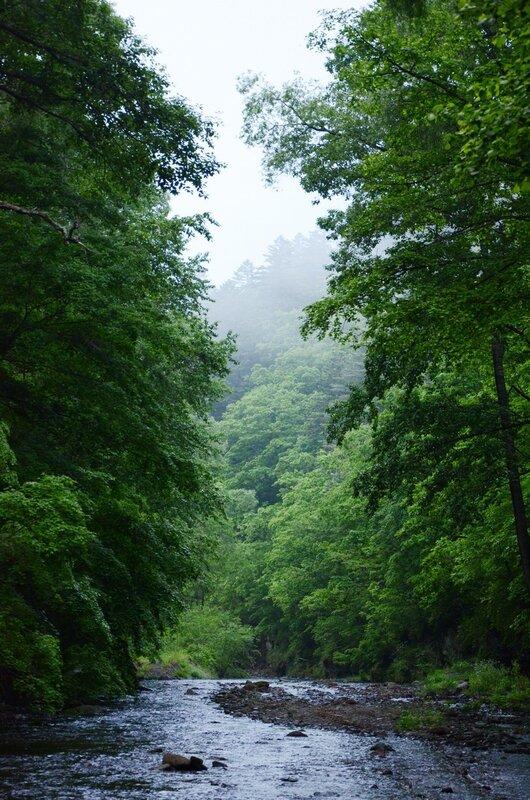 коридор в лесу.jpg