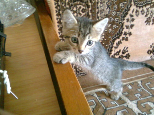 Совсем новый котёнок