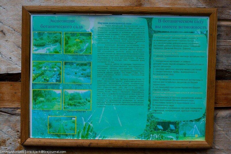 ботанический сад, алтай, лето, 2011,