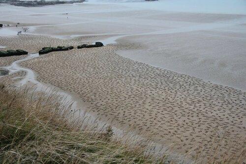 9000 силуэтов на песке