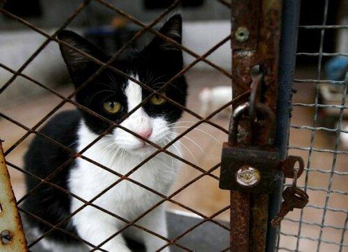 Депутаты планируют ужесточить санкции хозяевам домашних животным