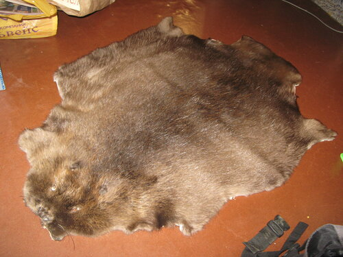 Как выделать хвост бобра в домашних условиях