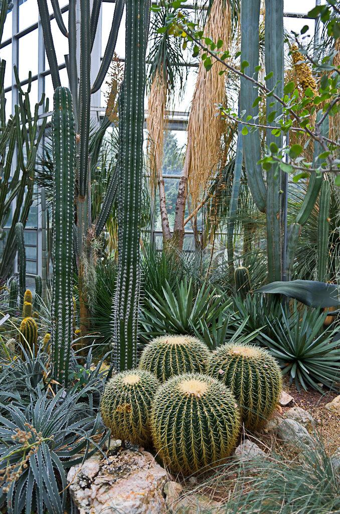 Кактусы в ботаническом саде Palmengarten