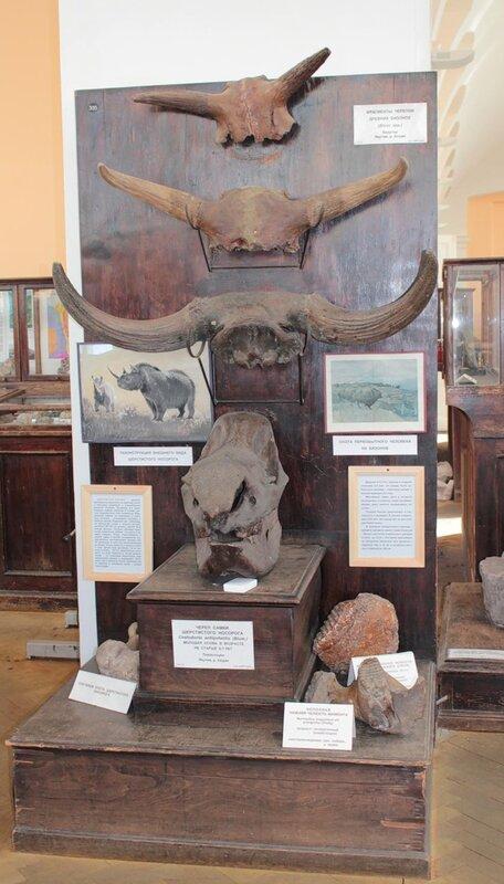 Кости шерстистого носорога