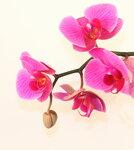 Orchids (1).jpg