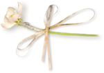 NLD Flower with ribbon sh.png