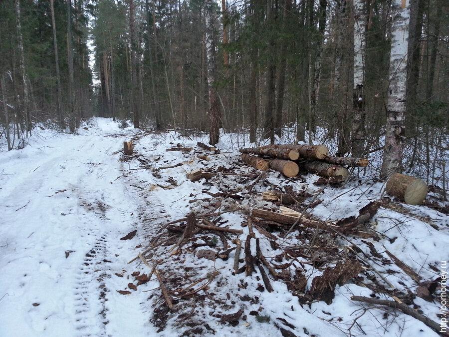 распиленные деревья в лесу