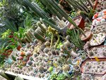 Коллекция кактусов.