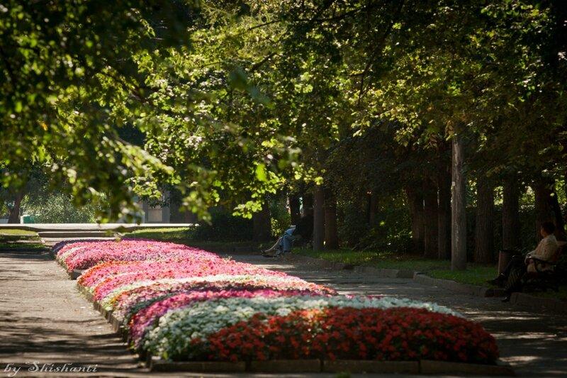 Вологда - цветущий город! | Вологодская область