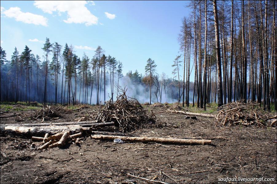 Сжигание порубочных остатков