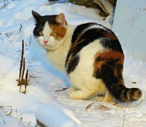 Прогулка по снежку