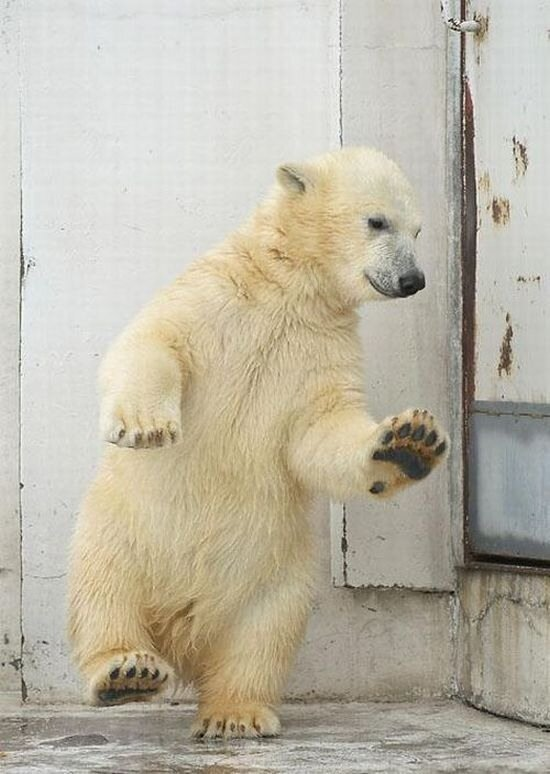 Танцующий с огнём (13 фото).  Маленький белый медвежонок (8 фото).