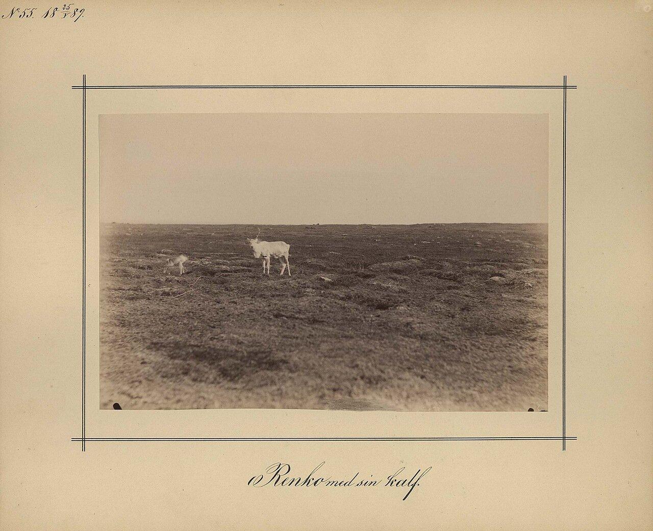25.5.1889. Тундра возле Орлова