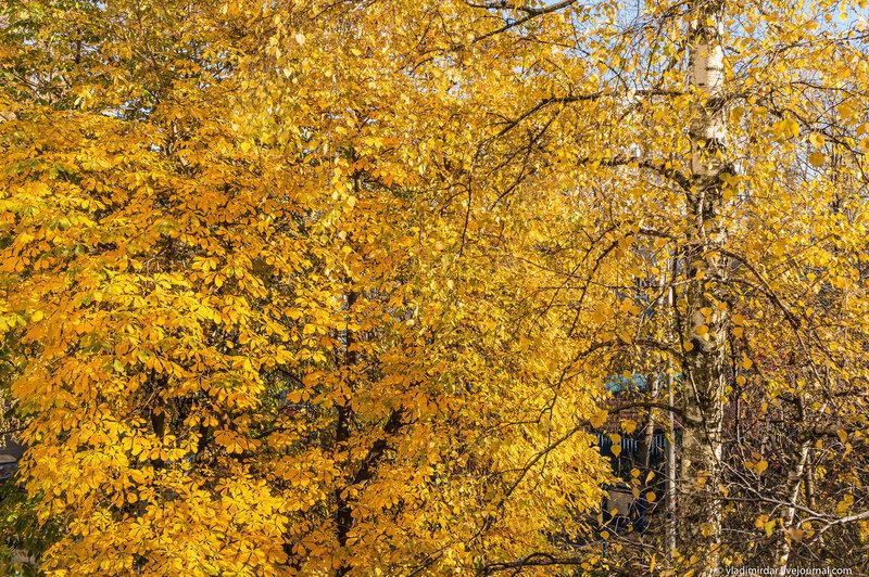 Мгновениея Золотой Осени