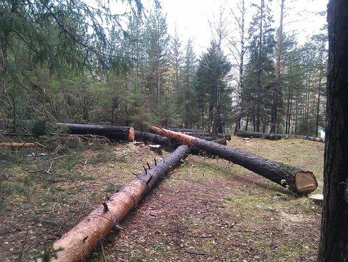 Защитим лес