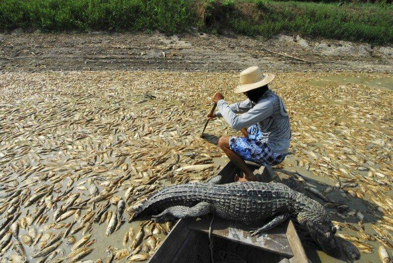 Амазонка пересохла Read More
