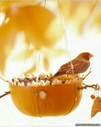 Кормушка для птиц из тыквы